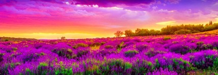 cropped-pink-purple-sky-and-spring-nature-landscape-header.jpg