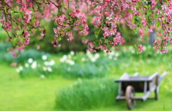 cropped-spring-beauty.jpg